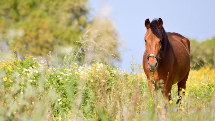 Pferdehaftpflicht Vergleich